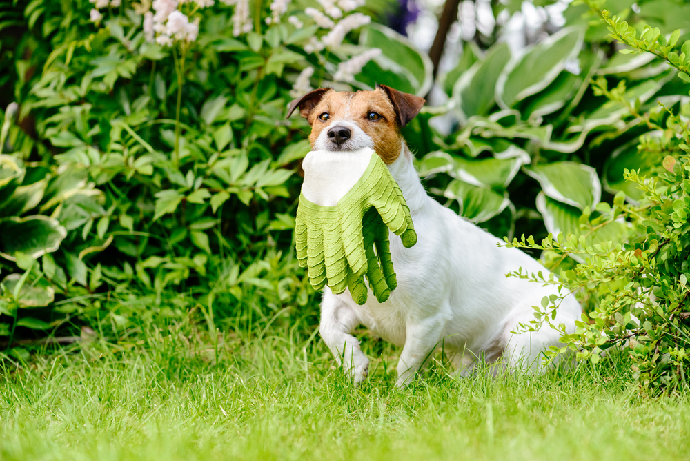 Aloe Vera For Dogs Rookes Pet Products